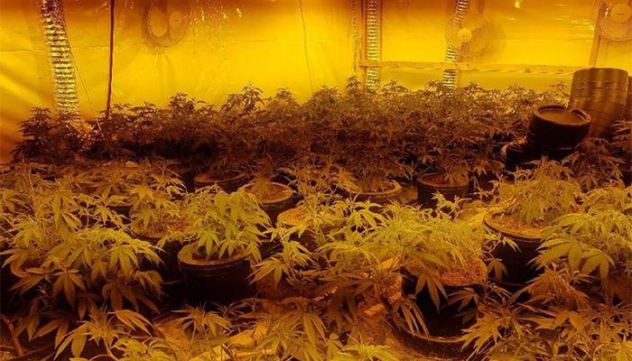 Mangotsfield police raid: Cannabis farm shut down