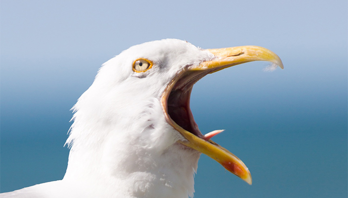 Seagull closes Baldwin Street in Bristol city centre